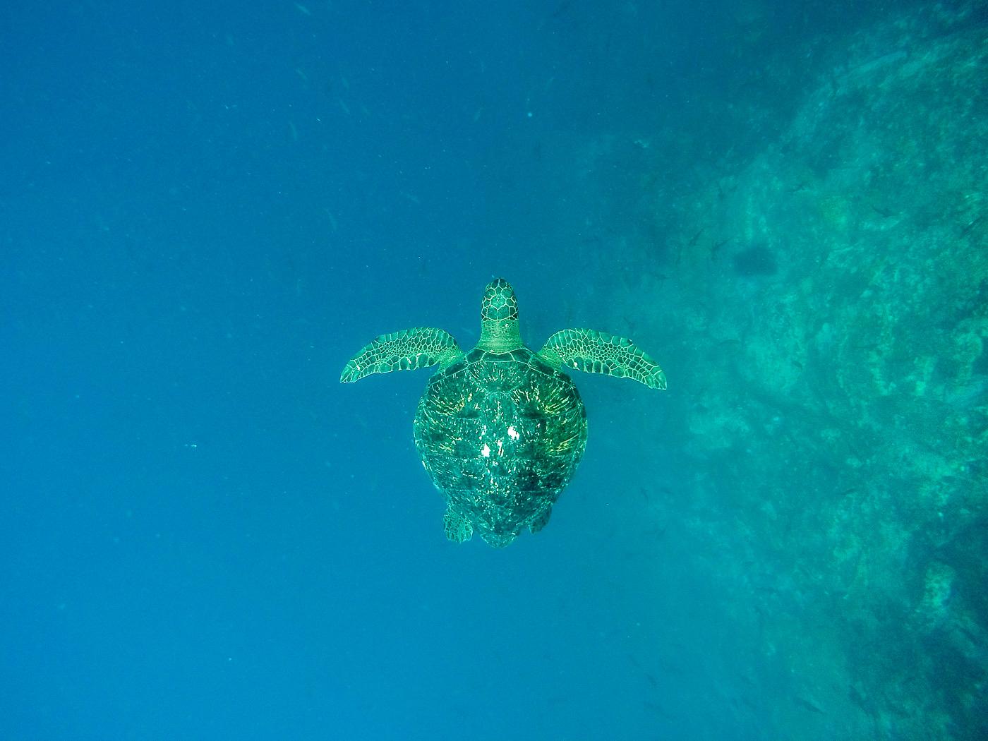 Sea Turtle, Kicker Rock, Isla San Cristobal