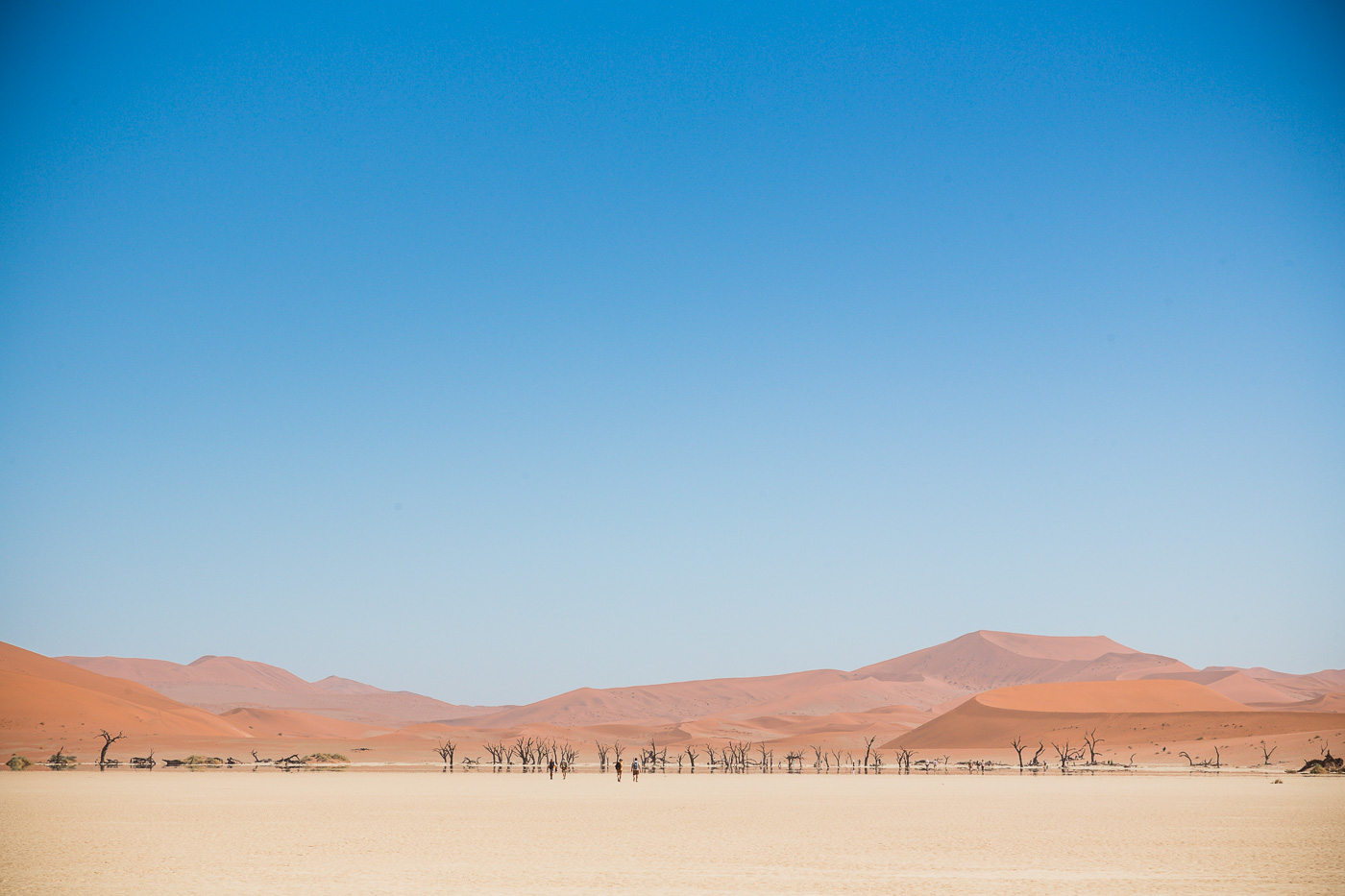 Dunes and petrified trees of Deadvlei Namibia