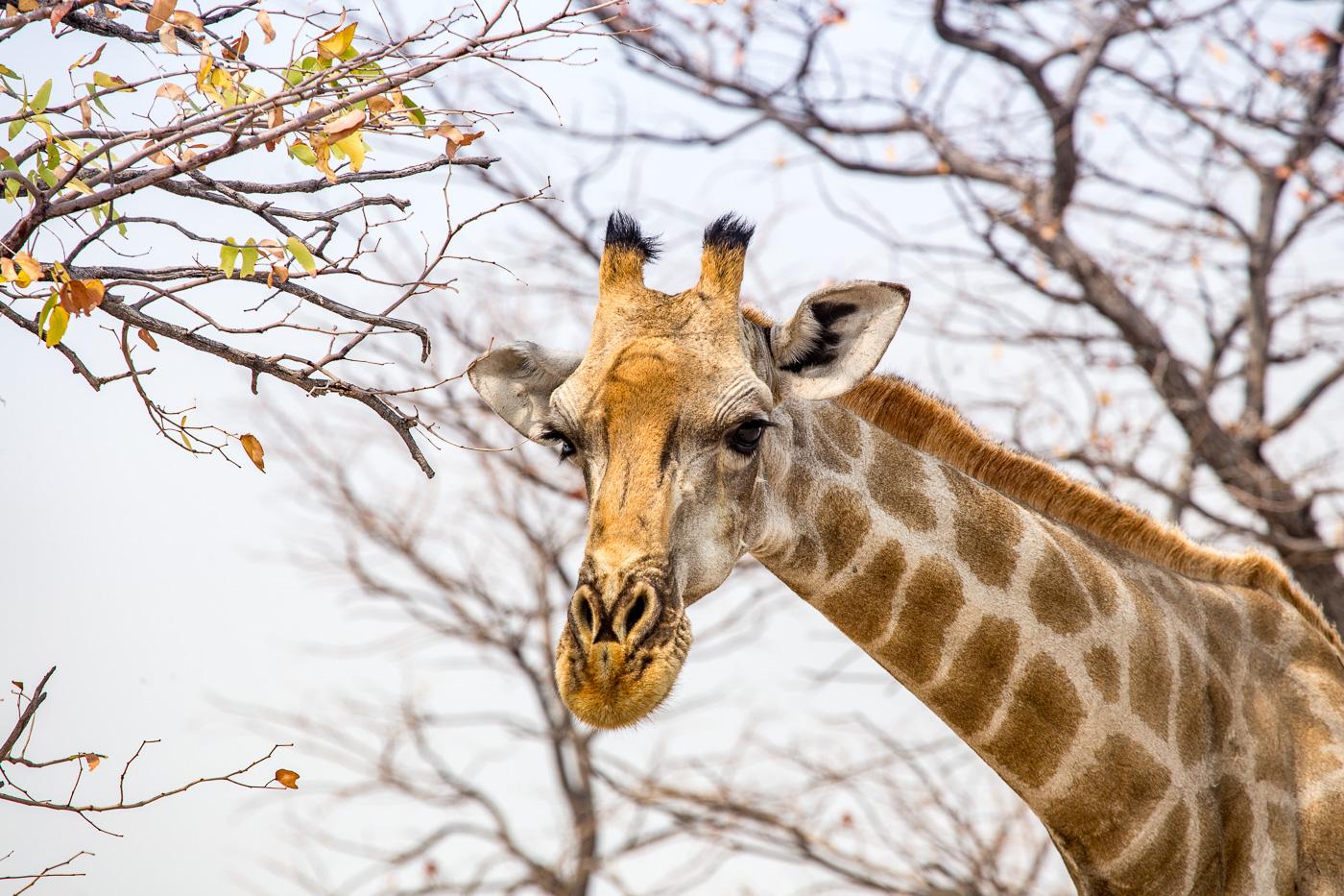 Etosha Game Reserve Self Drive Namibia -167