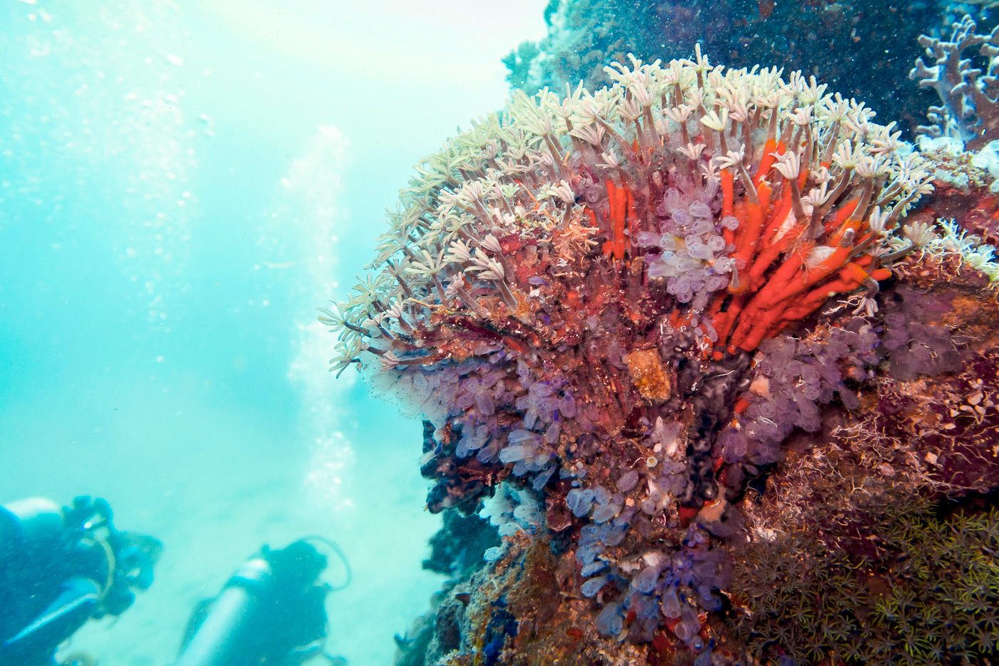 Chapel dive site at Apo Island off of Dauin in the Philippines