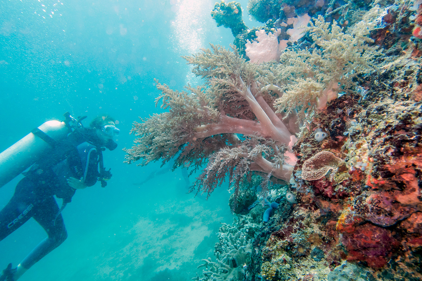 Best scuba diving sites in the philippines