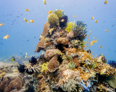 Beautiful corals of Apo Island off of Dauin in the Philippines